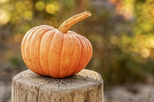 Feel your #Halloween #pumpkins are too close to your neighbour's boundary? Contact Angell Thompson for #buildingsurveying advice